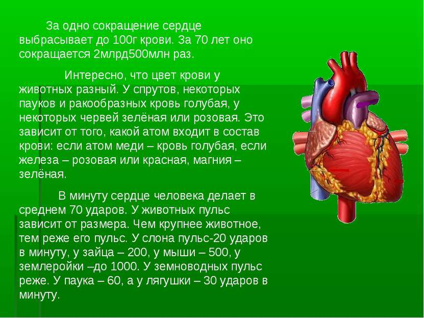 За одно сокращение сердце выбрасывает до 100г крови. За 70 лет оно сокращаетс...