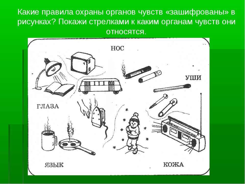 Какие правила охраны органов чувств «зашифрованы» в рисунках? Покажи стрелкам...