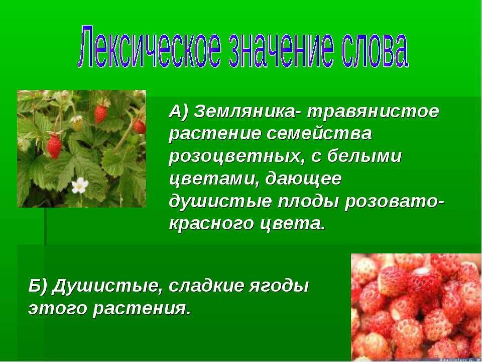 А) Земляника- травянистое растение семейства розоцветных, с белыми цветами, д...