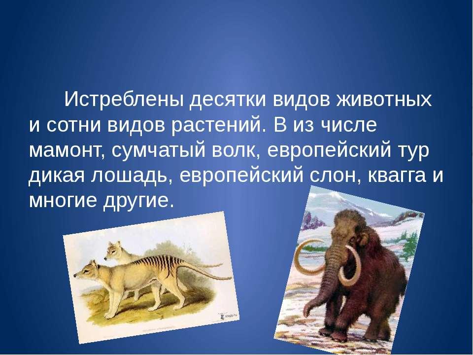 Истреблены десятки видов животных и сотни видов растений. В из числе мамонт, ...