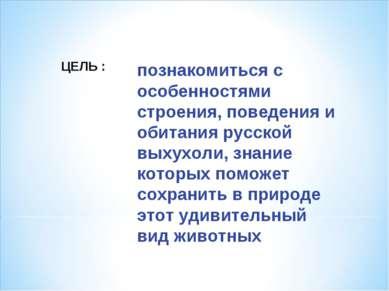 познакомиться с особенностями строения, поведения и обитания русской выхухоли...