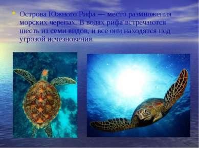 Острова Южного Рифа — место размножения морских черепах. В водах рифа встреча...
