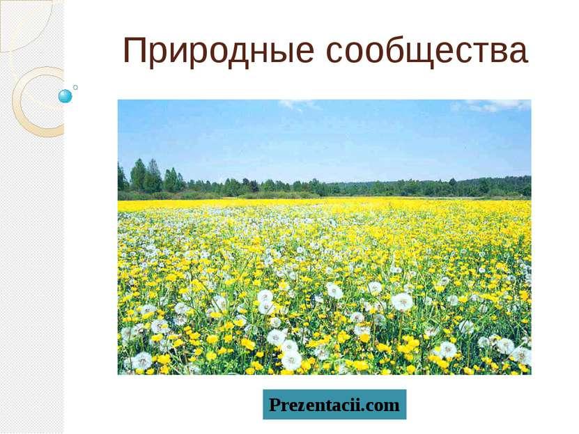 Природные сообщества Prezentacii.com