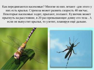 Как передвигаются насекомые? Многие из них летают -для этого у них есть крыль...