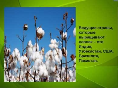 Ведущие страны, которые выращивают хлопок – это Индия, Узбекистан, США, Брази...