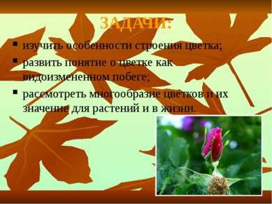 ЗАДАЧИ: изучить особенности строения цветка; развить понятие о цветке как вид...