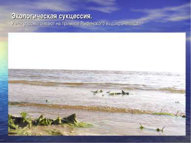 Экологическая сукцессия. Уч-ся рассматривают на примере Рыбинского водохранил...