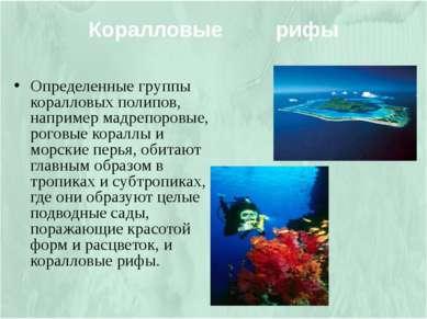 Определенные группы коралловых полипов, например мадрепоровые, роговые коралл...