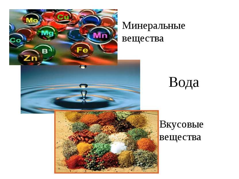 Минеральные вещества Вода Вкусовые вещества