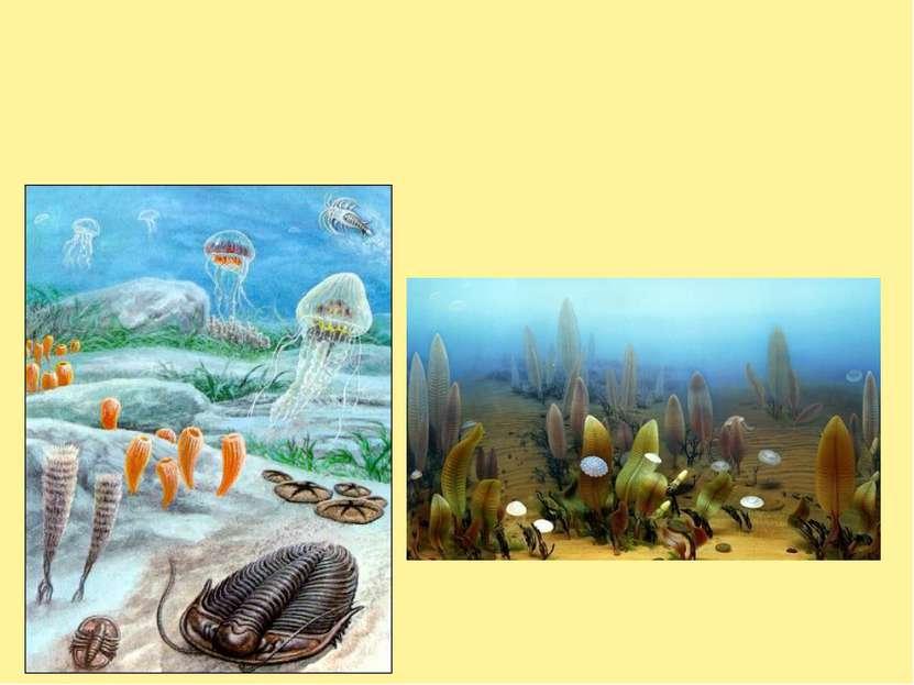 Кембрий - первый период палеозоя (эры древней жизни). Начался 570 млн. лет на...
