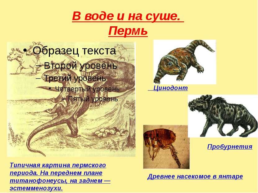 В воде и на суше. Пермь Цинодонт Пробурнетия Древнее насекомое в янтаре Типич...