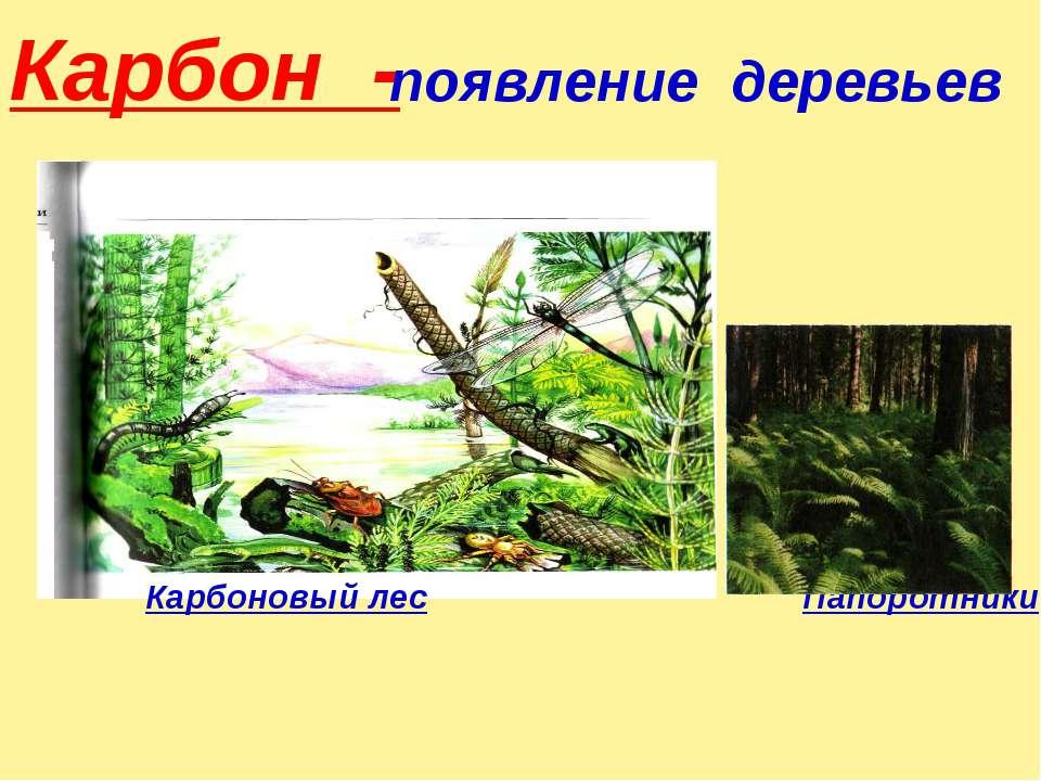 Карбон - Карбоновый лес Папоротники появление деревьев