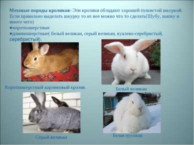 Меховые породы кроликов- Эти кролики обладают хорошей пушистой шкуркой. Если ...