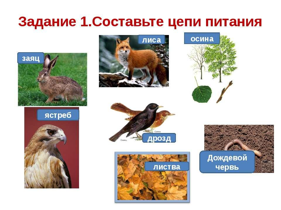 Задание 1.Составьте цепи питания заяц лиса осина дрозд листва Дождевой червь ...