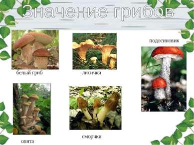 белый гриб лисички подосиновик опята сморчки