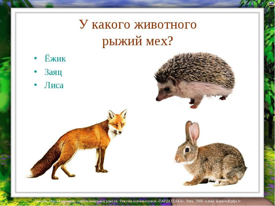 У какого животного рыжий мех? Ёжик Заяц Лиса Лазарева Лидия Андреевна, учител...