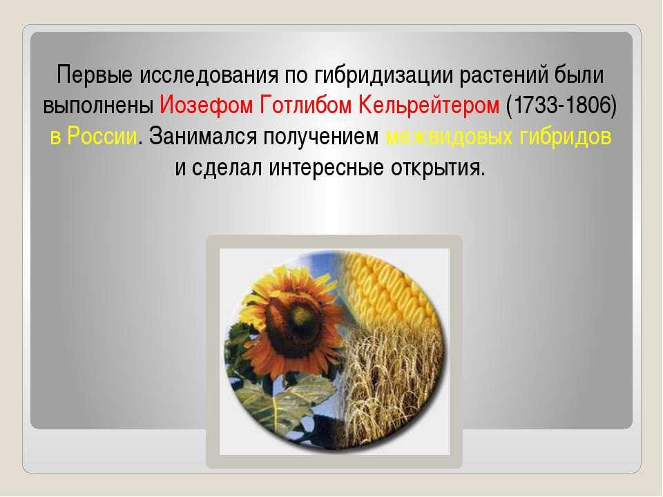 Первые исследования по гибридизации растений были выполнены Иозефом Готлибом ...