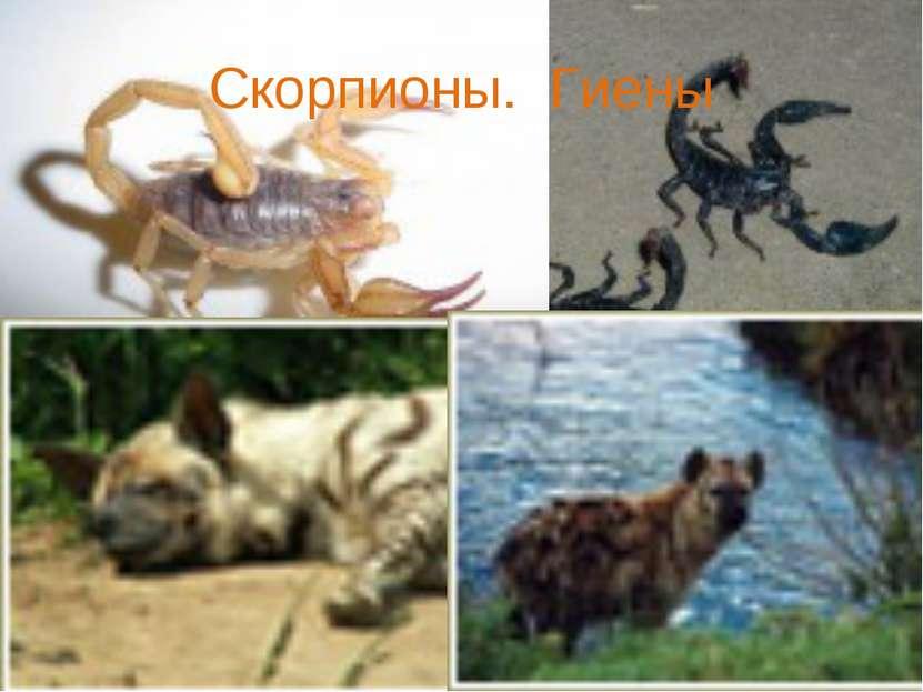 Скорпионы. Гиены
