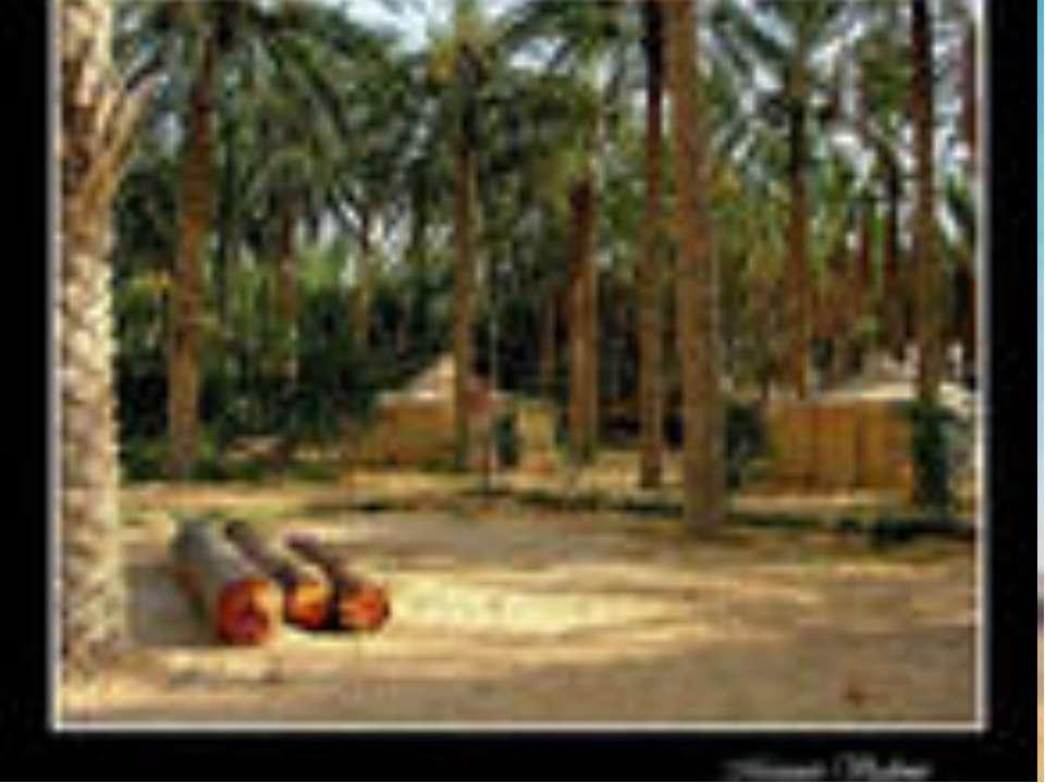 Оазисы Самыми плодородными районами пустынь являются оазисы. Они находятся ря...