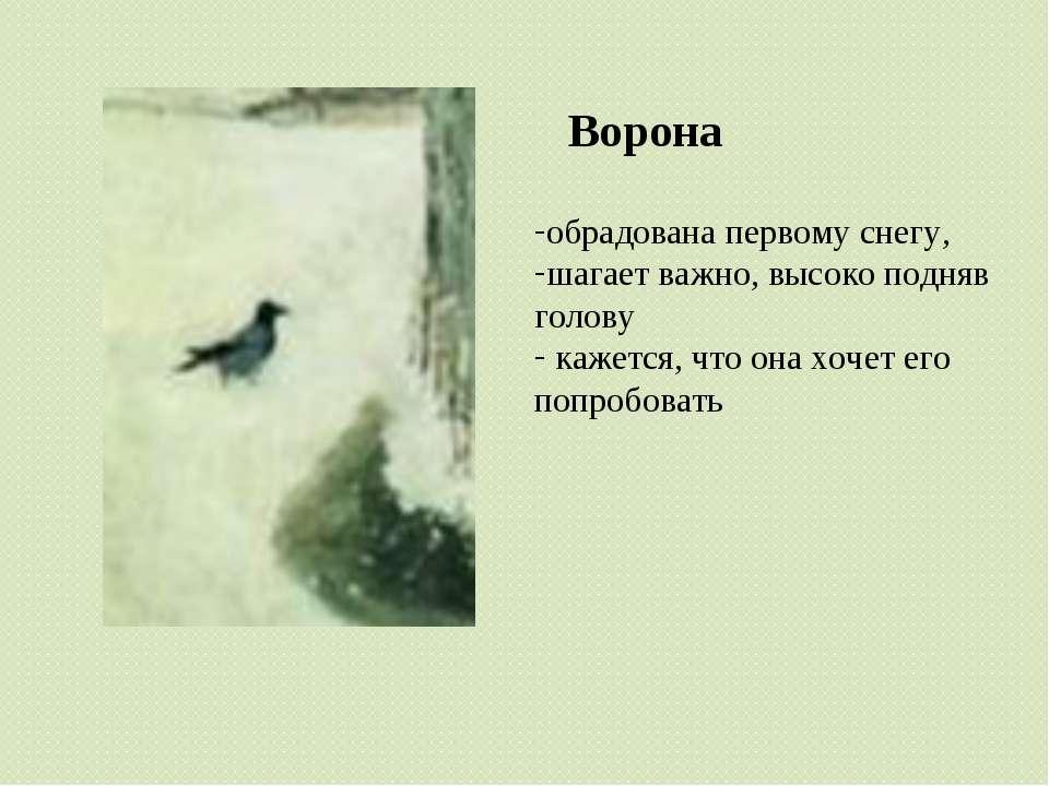 Ворона обрадована первому снегу, шагает важно, высоко подняв голову кажется, ...