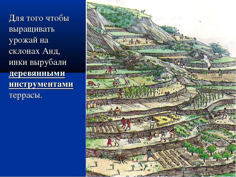 Для того чтобы выращивать урожай на склонах Анд, инки вырубали деревянными ин...