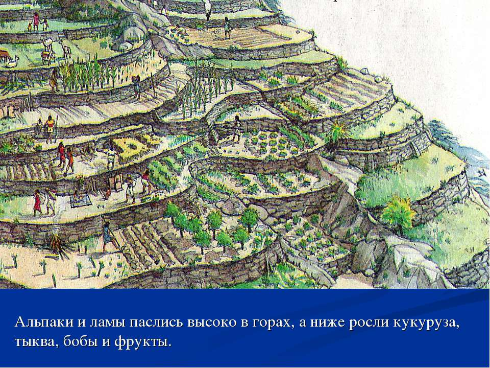 Альпаки и ламы паслись высоко в горах, а ниже росли кукуруза, тыква, бобы и ф...