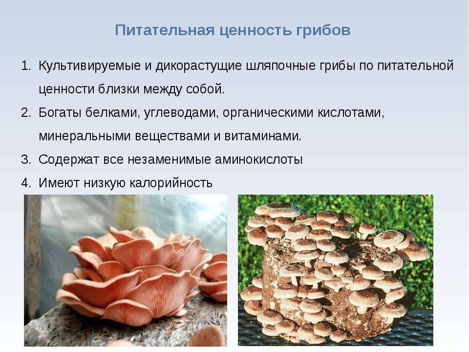 * Питательная ценность грибов Культивируемые и дикорастущие шляпочные грибы п...