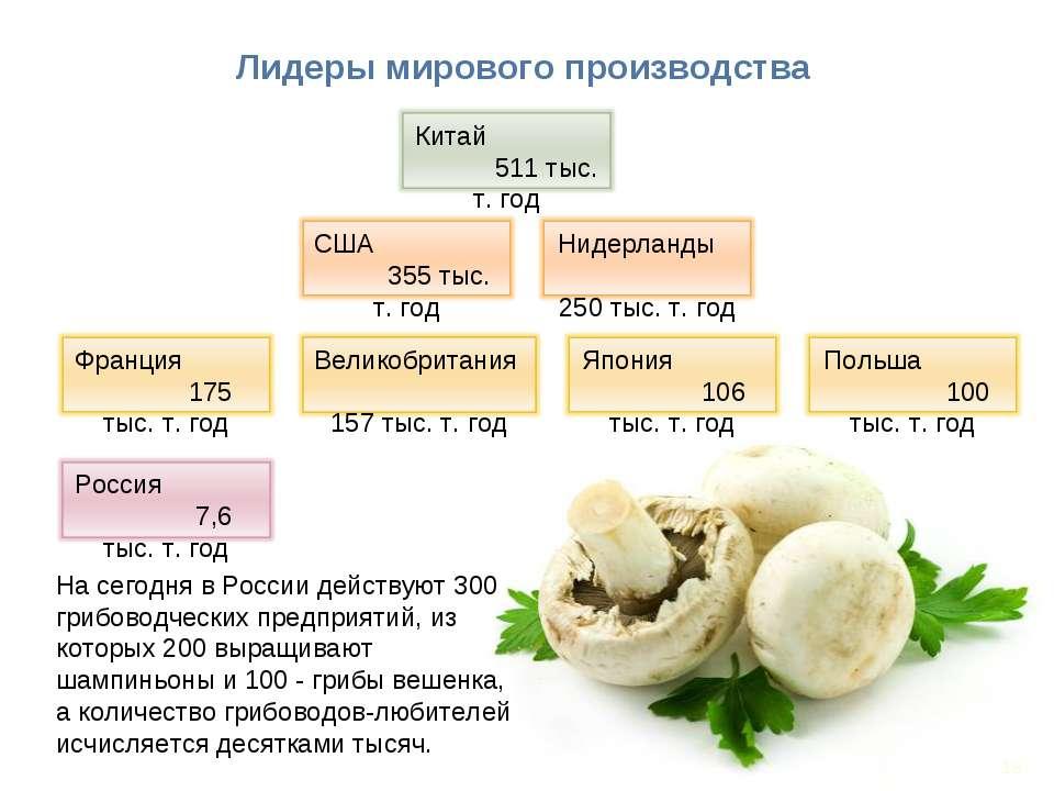 * Лидеры мирового производства На сегодня в России действуют 300 грибоводческ...