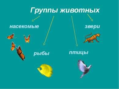 Группы животных насекомые рыбы птицы звери