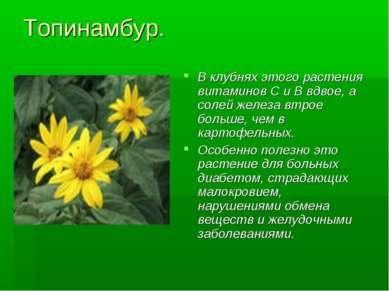 Топинамбур. В клубнях этого растения витаминов С и В вдвое, а солей железа вт...