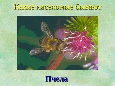 Пчела Какие насекомые бывают