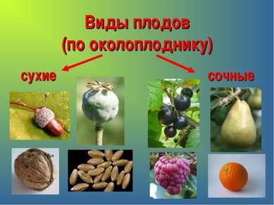Виды плодов (по околоплоднику) сухие сочные