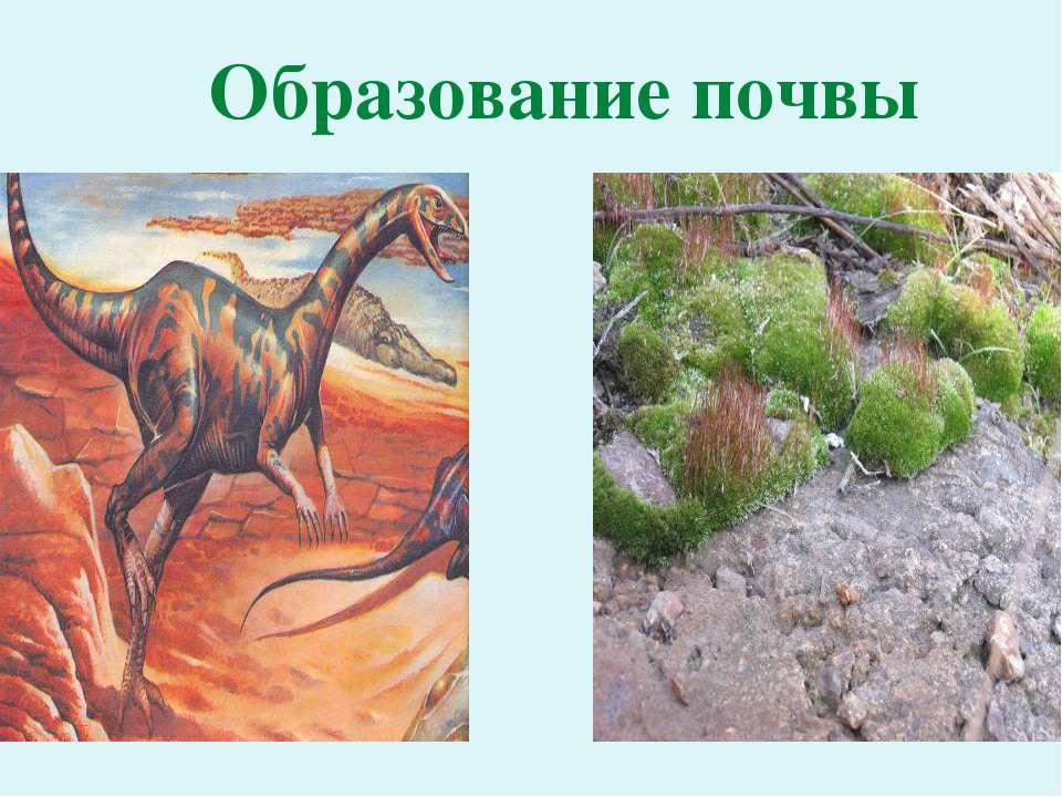 Образование почвы