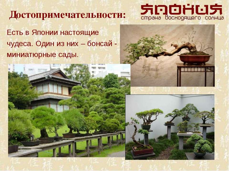 Достопримечательности: Есть в Японии настоящие чудеса. Один из них – бонсай -...