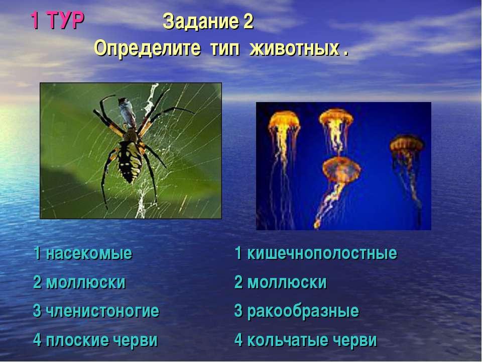1 ТУР Задание 2 Определите тип животных .