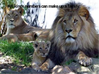 All kinds numbers can make up a family.