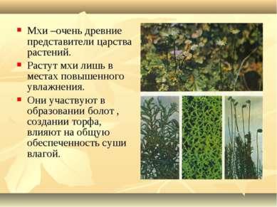Мхи –очень древние представители царства растений. Растут мхи лишь в местах п...