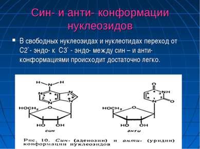 Син- и анти- конформации нуклеозидов В свободных нуклеозидах и нуклеотидах пе...