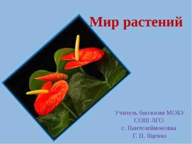 Мир растений Учитель биологии МОБУ СОШ ЛГО с. Пантелеймоновка Г. П. Яценко