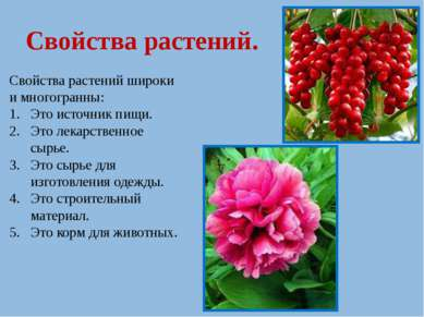 Свойства растений. Свойства растений широки и многогранны: Это источник пищи....