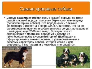 Самые красивые собаки Самые красивые собаки есть в каждой породе, но титул са...