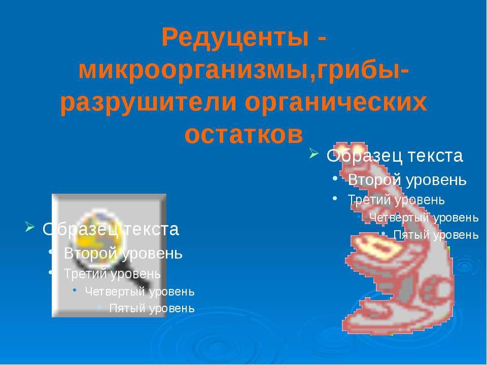 Редуценты - микроорганизмы,грибы-разрушители органических остатков