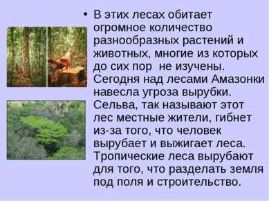 В этих лесах обитает огромное количество разнообразных растений и животных, м...