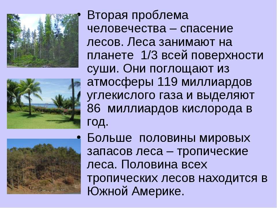 Вторая проблема человечества – спасение лесов. Леса занимают на планете 1/3 в...