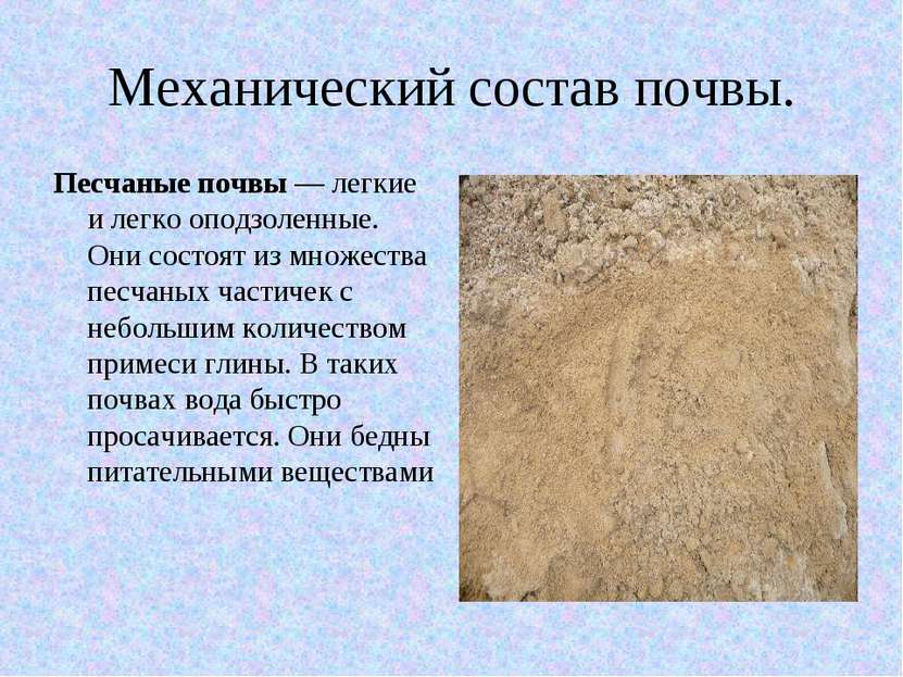 Механический состав почвы. Песчаные почвы — легкие и легко оподзоленные. Они ...