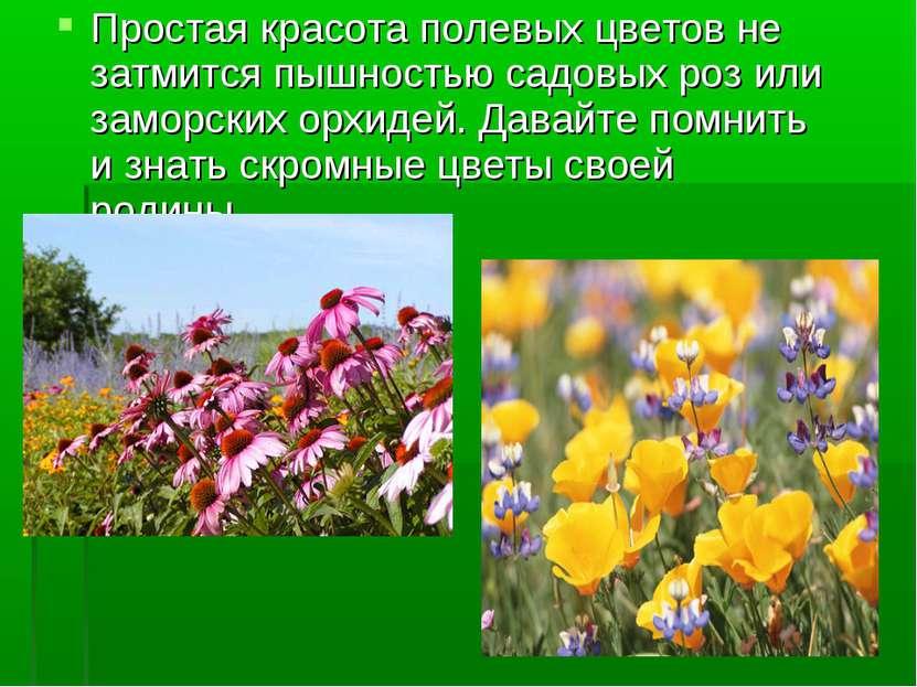 Простая красота полевых цветов не затмится пышностью садовых роз или заморски...