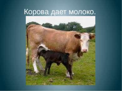 Корова дает молоко.