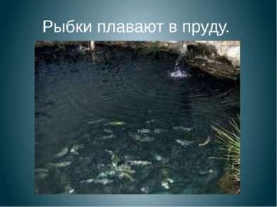 Рыбки плавают в пруду.