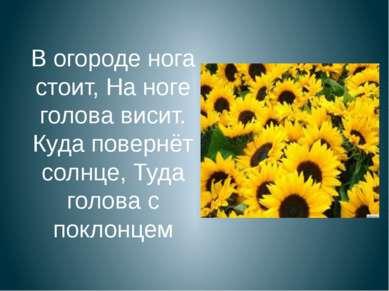 В огороде нога стоит, На ноге голова висит. Куда повернёт солнце, Туда голова...