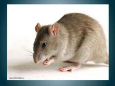 Мышка крошки собирала, Кошка в гости мышь позвала. Просит мышка кошку: Дай в ...